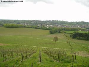 Dorking from the Vineyard