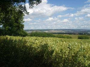 View near Whitehorse Wood